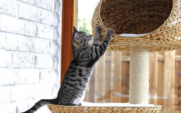 Pourquoi se procurer un arbre à chat?
