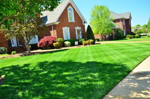 Les bonnes raisons d'opter pour une pelouse artificielle