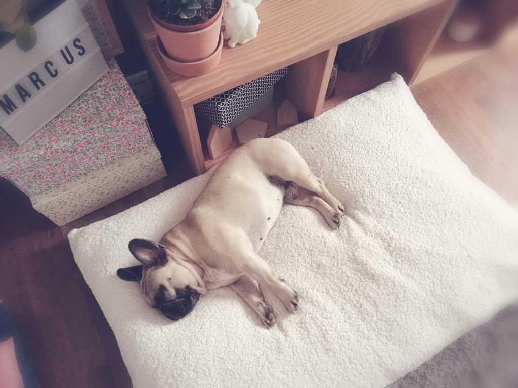 De quels accessoires mon chien a-t-il besoin?
