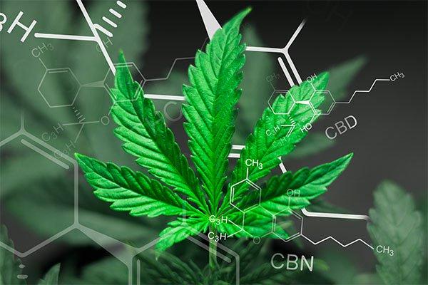 Fleur de cannabis : quelles sont les différences entre THC et CBD ?