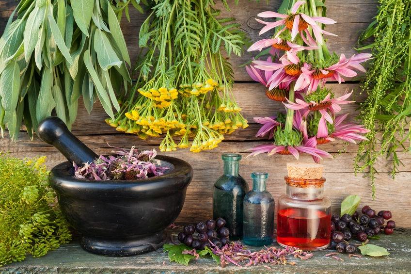 Comment utiliser des plantes médicales pour soigner des maladies ?