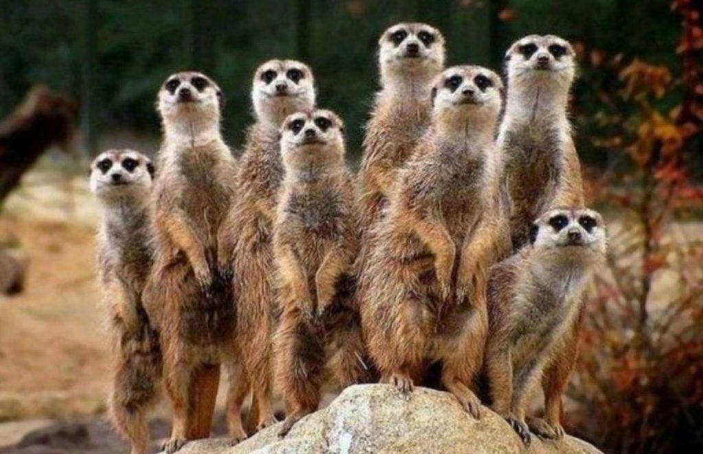 Découvrez 4 utilités insoupçonnées des zoos