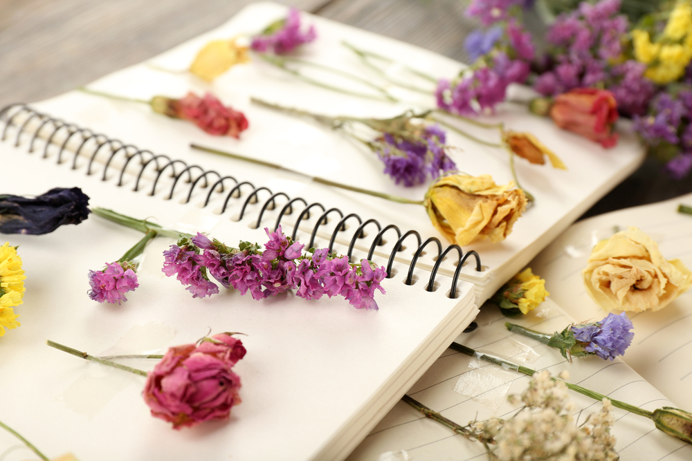 Que sont les fleurs séchées ? Sont-ce de vraies fleurs?