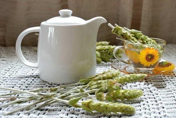Les origines et la culture du thé Mursalski