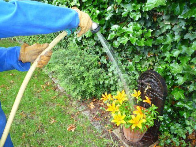 Comment arroser efficacement les plantes du jardin? Nos conseils pour optimiser vos plantations!