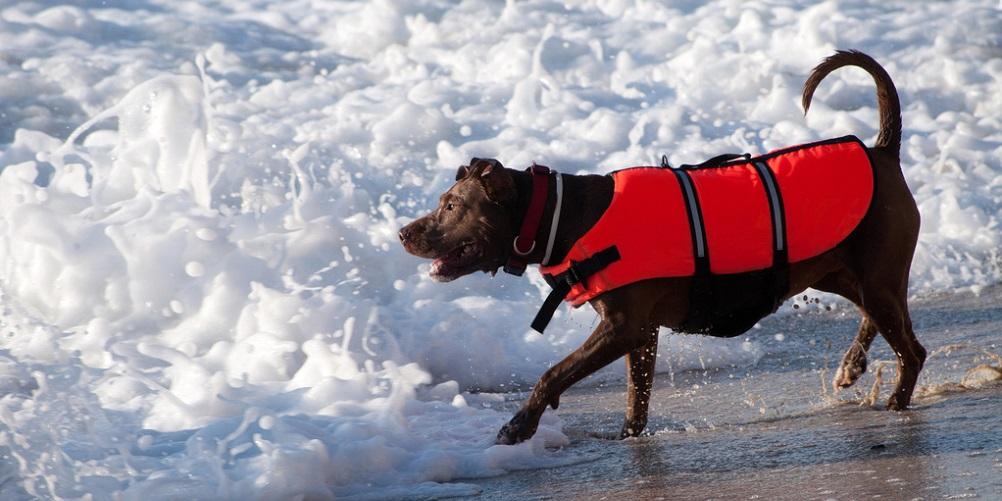 Tout savoir sur les gilets de sauvetage pour chiens